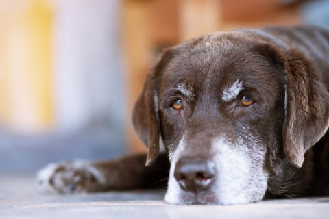 Heartworm disease in pets, Asheville Vet