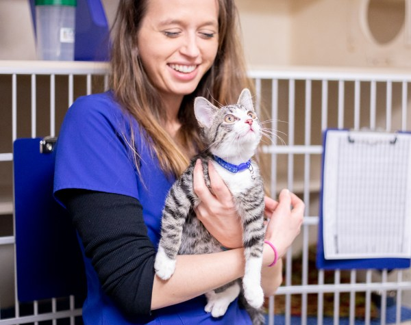 Disease & Parasite Prevention, Asheville Vet