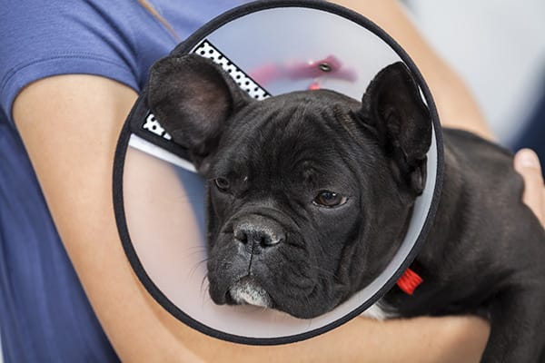 Tips for caring for your pet after they have surgery, from your North Asheville vet
