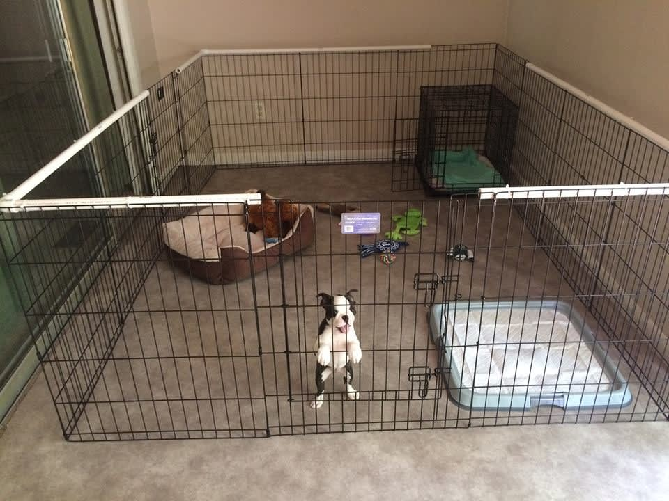 Safe area for puppy to learn to be alone, AHNA